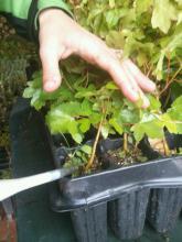 las plantas micorrizadas y con aporte de retenedor parece que presentan mejores resultados por el momento